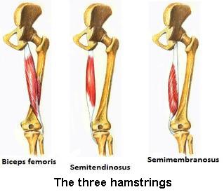 Hamstrings-text-3